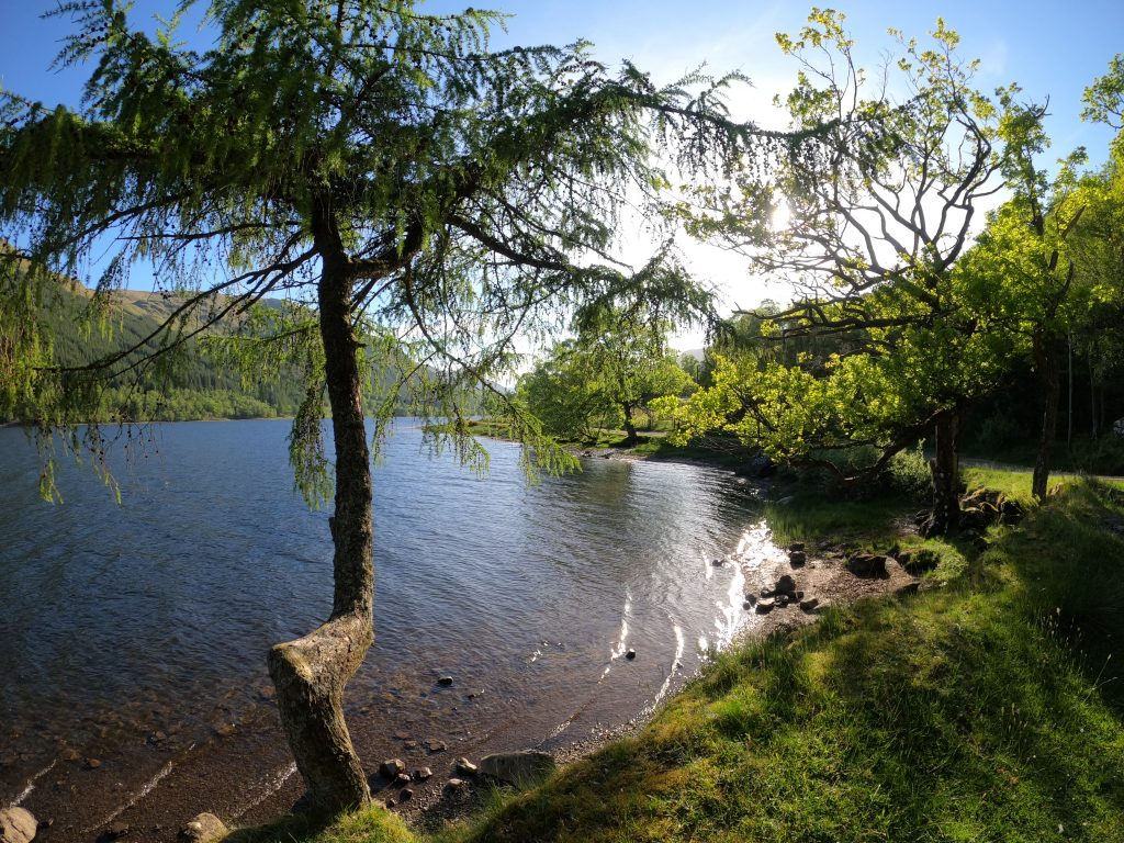 Tree on the edge of the water of Loch Voil