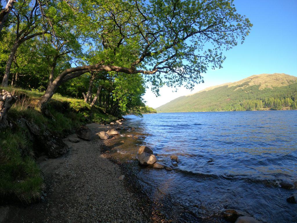 Tree overhanging water of Loch Voil