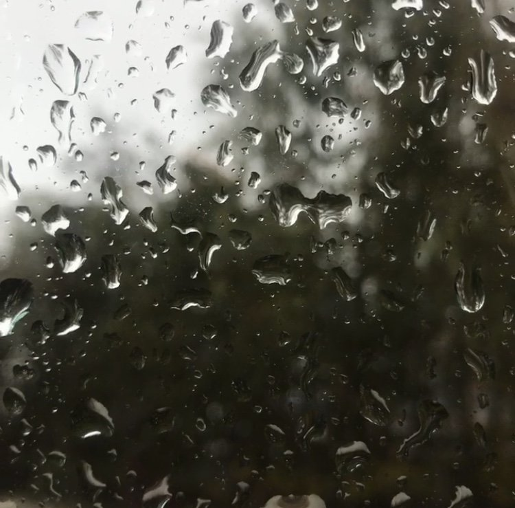 Raindrops on window with trees in the back ground