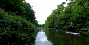 Stand up paddle boarders on canal