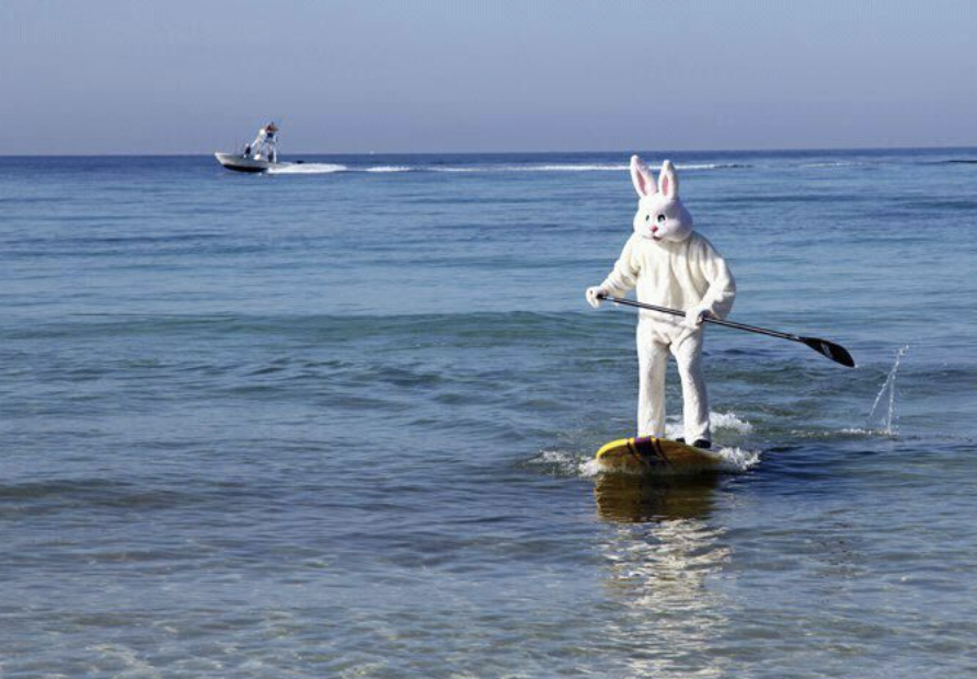 Easter Bunny on Stand Up Paddleboard